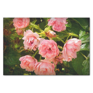 Coming up Roses Gift Tissue Tissue Paper
