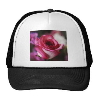 Coming up roses hats