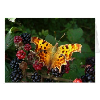 comma butterfly on blackberries card