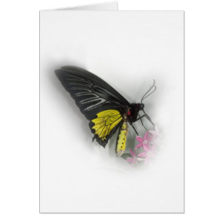Common Birdwing butterfly Card