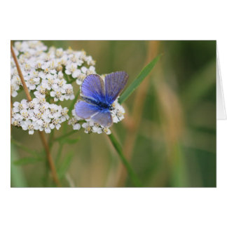 Common blue butterfly greetings card