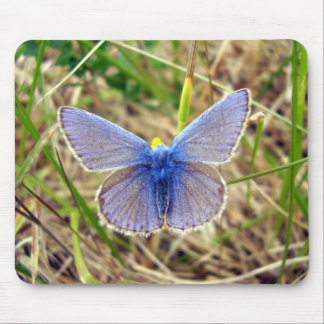 Common Blue Butterfly Mouse Mat