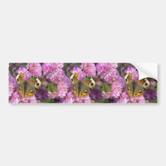 Common Buckeye Butterfly Bumper Sticker