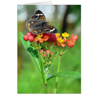 Common Buckeye Butterfly Greeting Card
