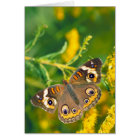 Common Buckeye Butterfly on Goldenrod Card