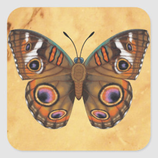Common Buckeye Butterfly Square Sticker