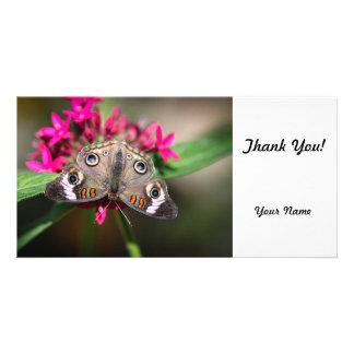 Common Buckeye Junonia Coenia Photo Cards