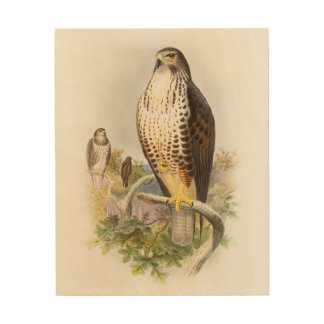 Common Buzzard John Gould Birds of Great Britain Wood Canvas