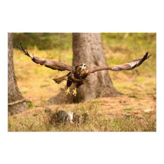 Common Buzzard Photo Print