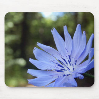 Common Chicory Mouse Mat