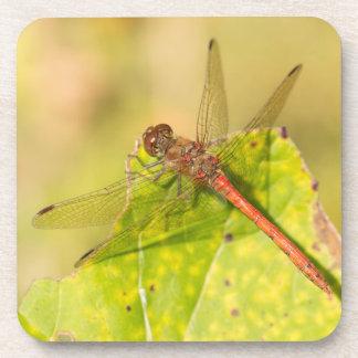 Common Darter Dragonfly Coaster