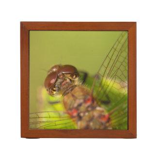 Common Darter Dragonfly Desk Organiser