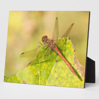 Common Darter Dragonfly Plaque