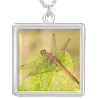 Common Darter Dragonfly Silver Plated Necklace