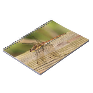 Common Darter Dragonfly Spiral Notebooks