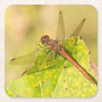 Common Darter Dragonfly Square Paper Coaster
