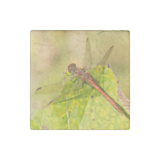 Common Darter Dragonfly Stone Magnet