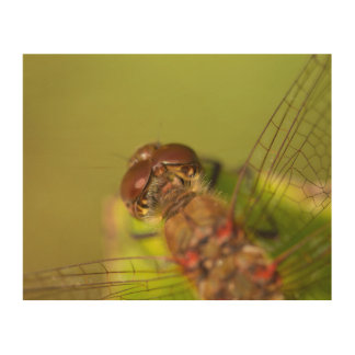 Common Darter Dragonfly Wood Wall Art
