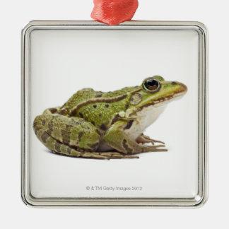 Common European frog or Edible Frog Christmas Tree Ornaments