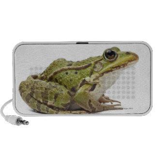 Common European frog or Edible Frog Speaker