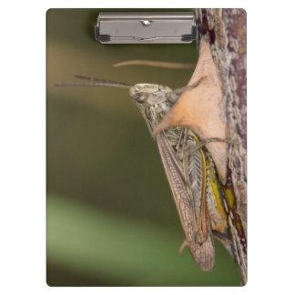 Common Field Grasshopper Clipboard