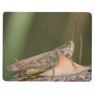 Common Field Grasshopper Journal