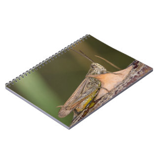 Common Field Grasshopper Notebooks