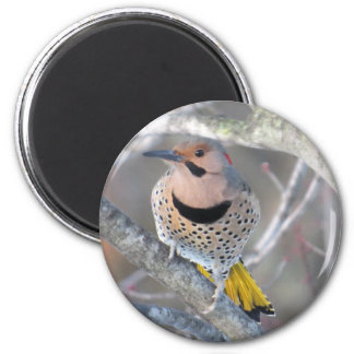 Common Flicker Magnet
