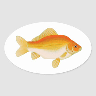 Common Goldfish Oval Sticker