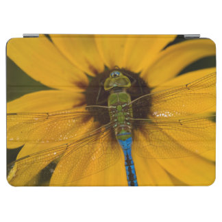 Common Green Darner male on Black-eyed Susan iPad Air Cover