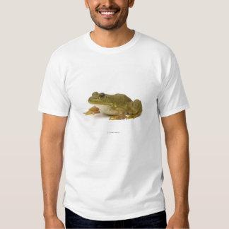 Common Green Frog Tee Shirts