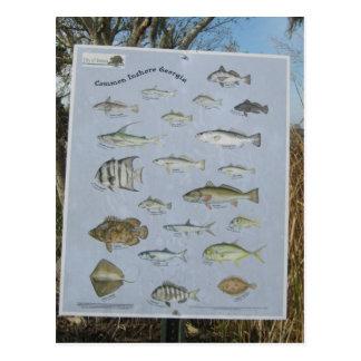 common inshore coastal fish of Georgia's Postcard
