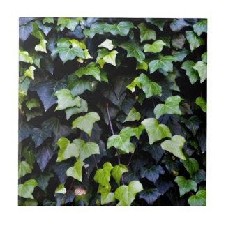 Common ivy ceramic tile