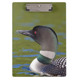 Common loon in water, Canada Clipboards