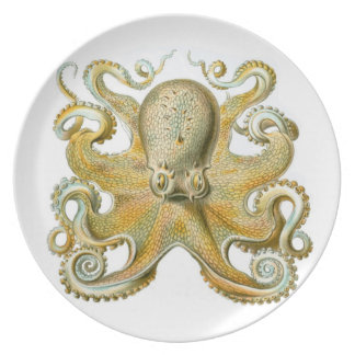 Common Octopus on a plate