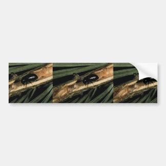 Common Pine Shoot Beetle Bumper Sticker