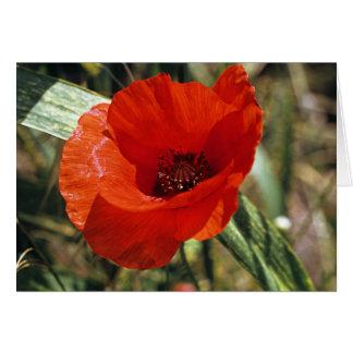Common Poppy Card