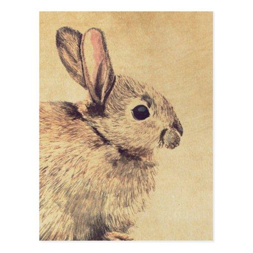 Common Rabbit Watercolour Sketch Postcard