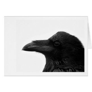 Common Raven Notecard