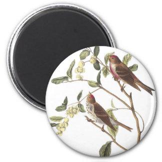 Common Redpoll Fridge Magnets