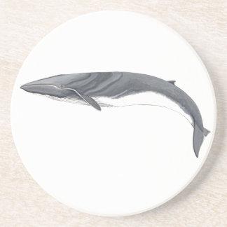 Common Rorcual - aim whale puts glasses Coaster