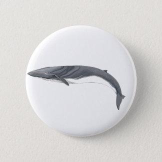 Common Rorcual clasp - aim whale pins