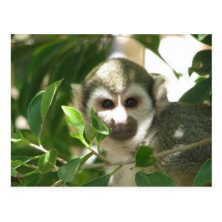 Common Squirrel Monkey Postcard