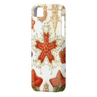 Common Starfish Designs iPhone 5 Cover