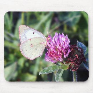 Common Sulphur Butterfly Mousepad