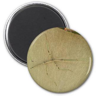 Common Walkingstick (Diapheromera femorata) Items 6 Cm Round Magnet