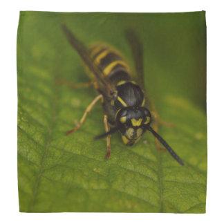 Common Wasp Bandana