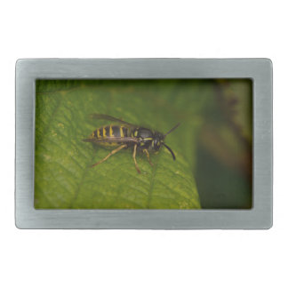 Common Wasp Belt Buckle