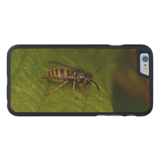 Common Wasp Carved Maple iPhone 6 Case