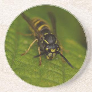 Common Wasp Coaster